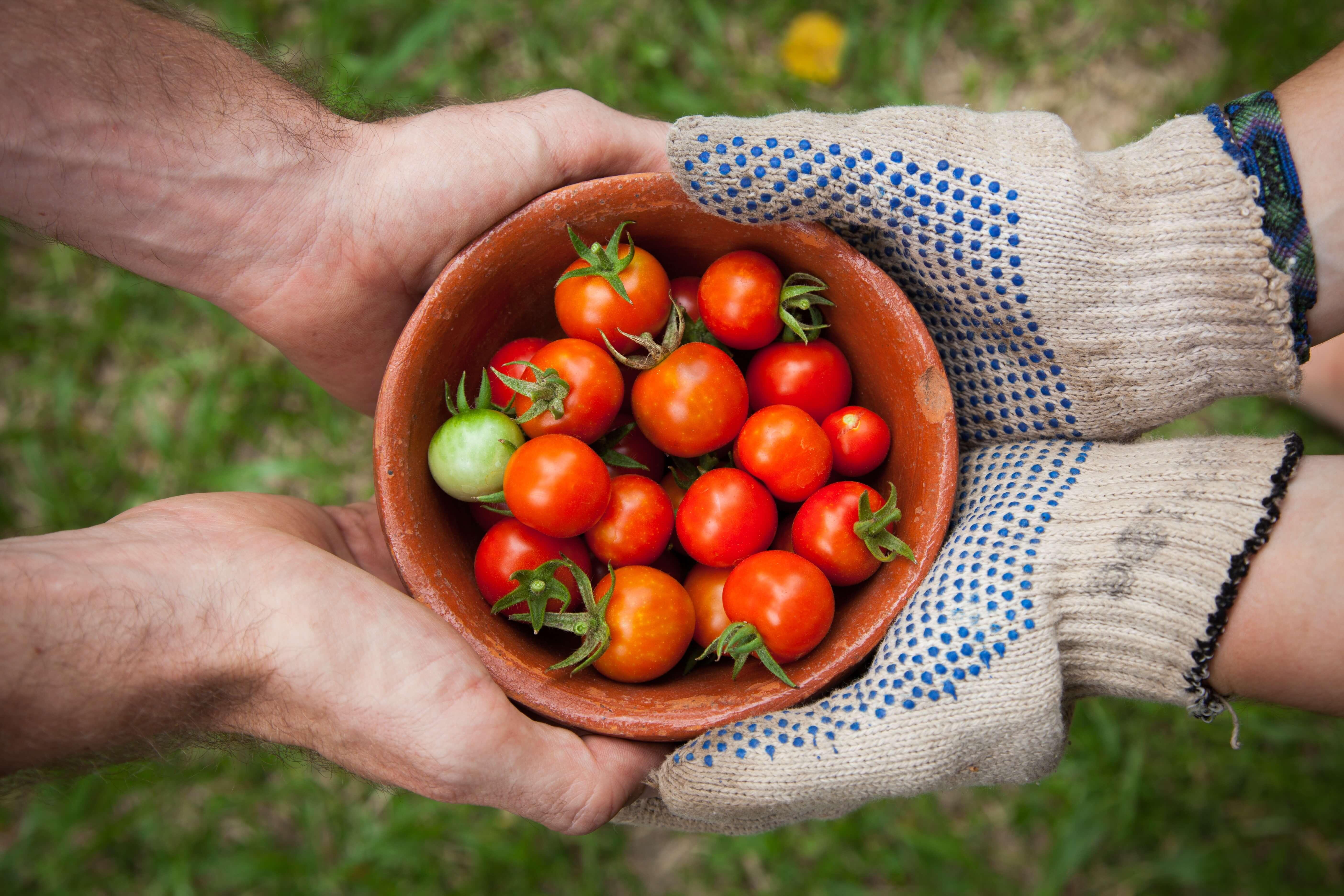Ik wil aan de slag in mijn tuin. Hoe ga ik te werk?