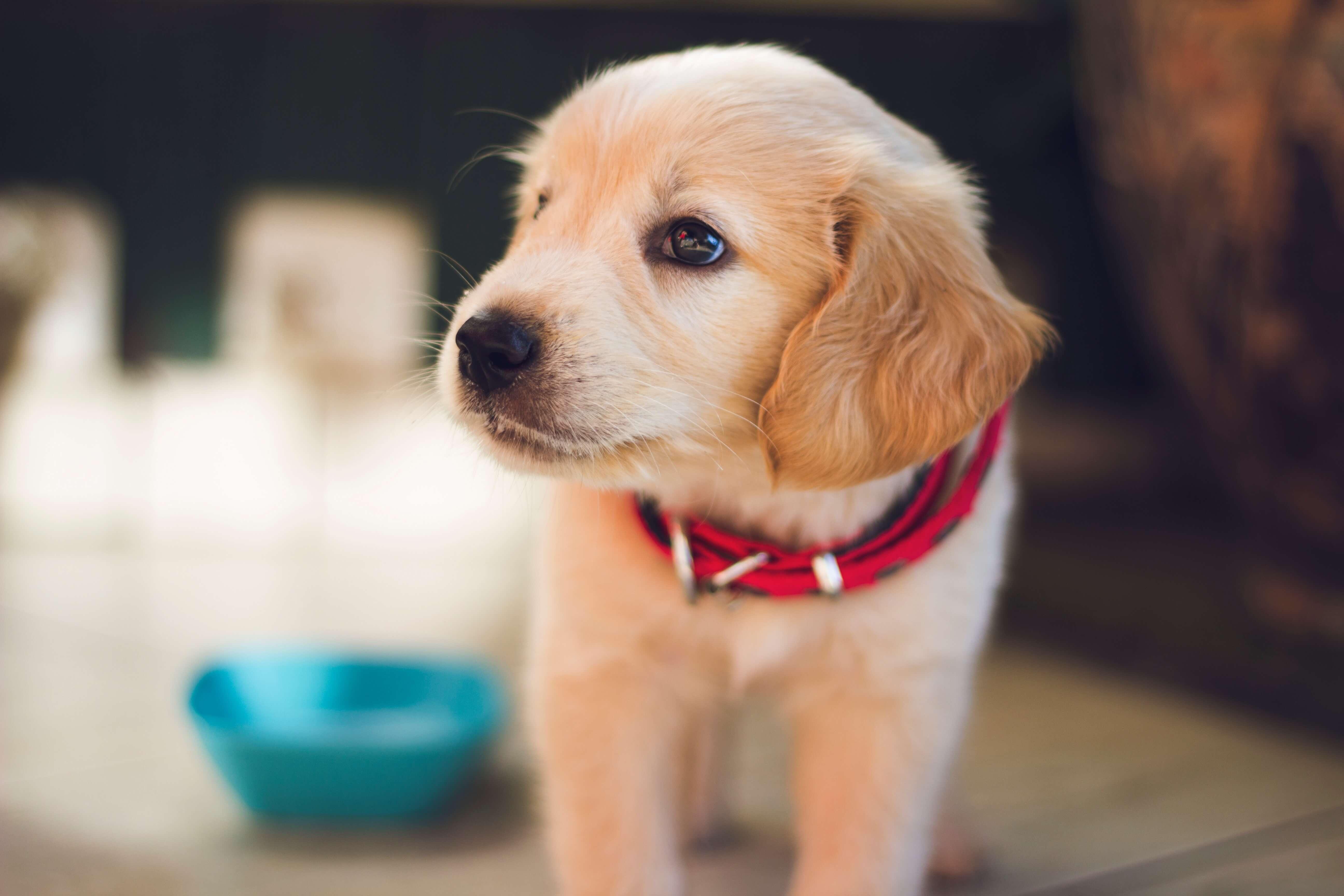Weekendje van huis zonder je hond?