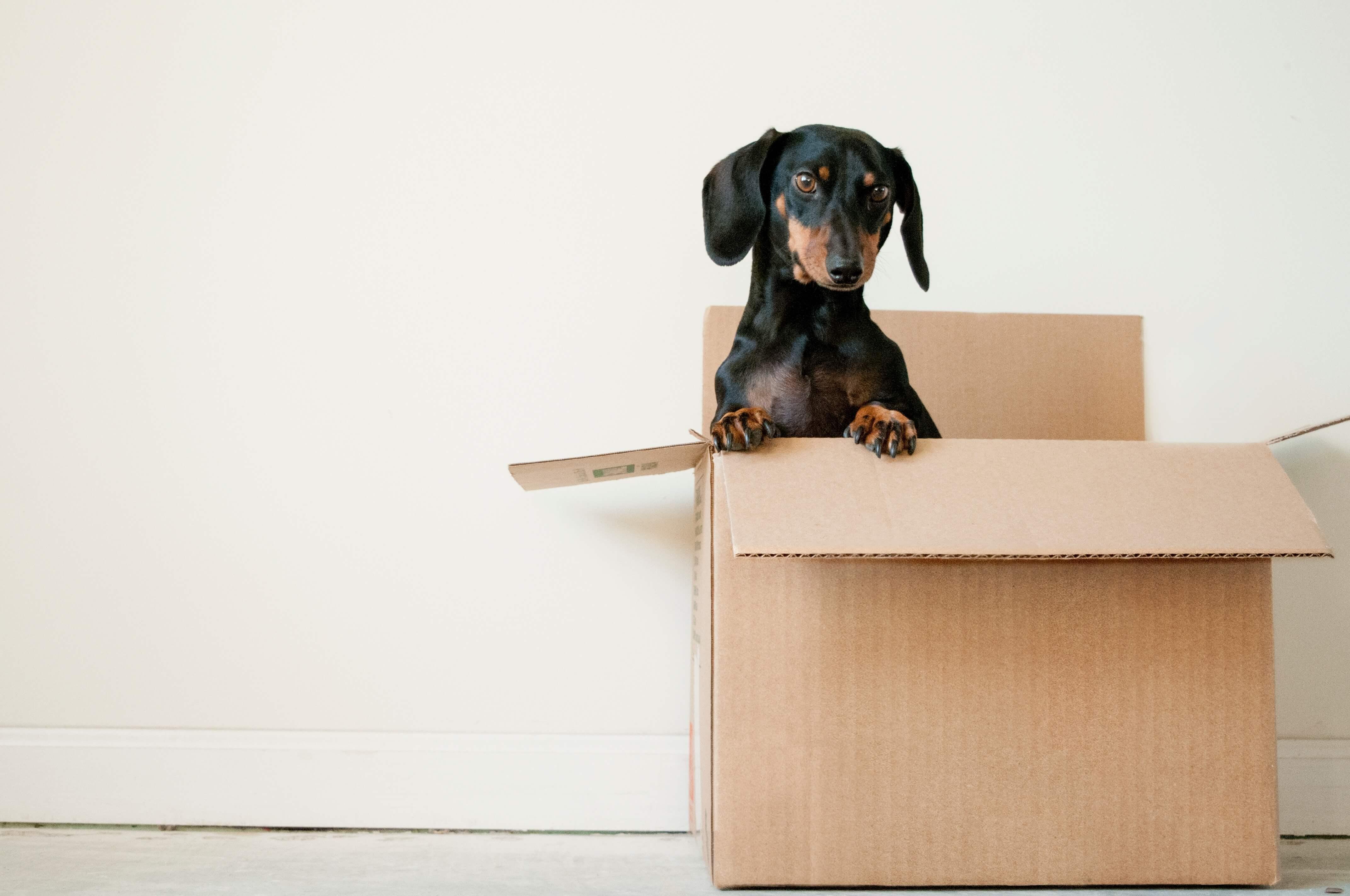 Tips bij het verhuizen naar jouw nieuwe woning