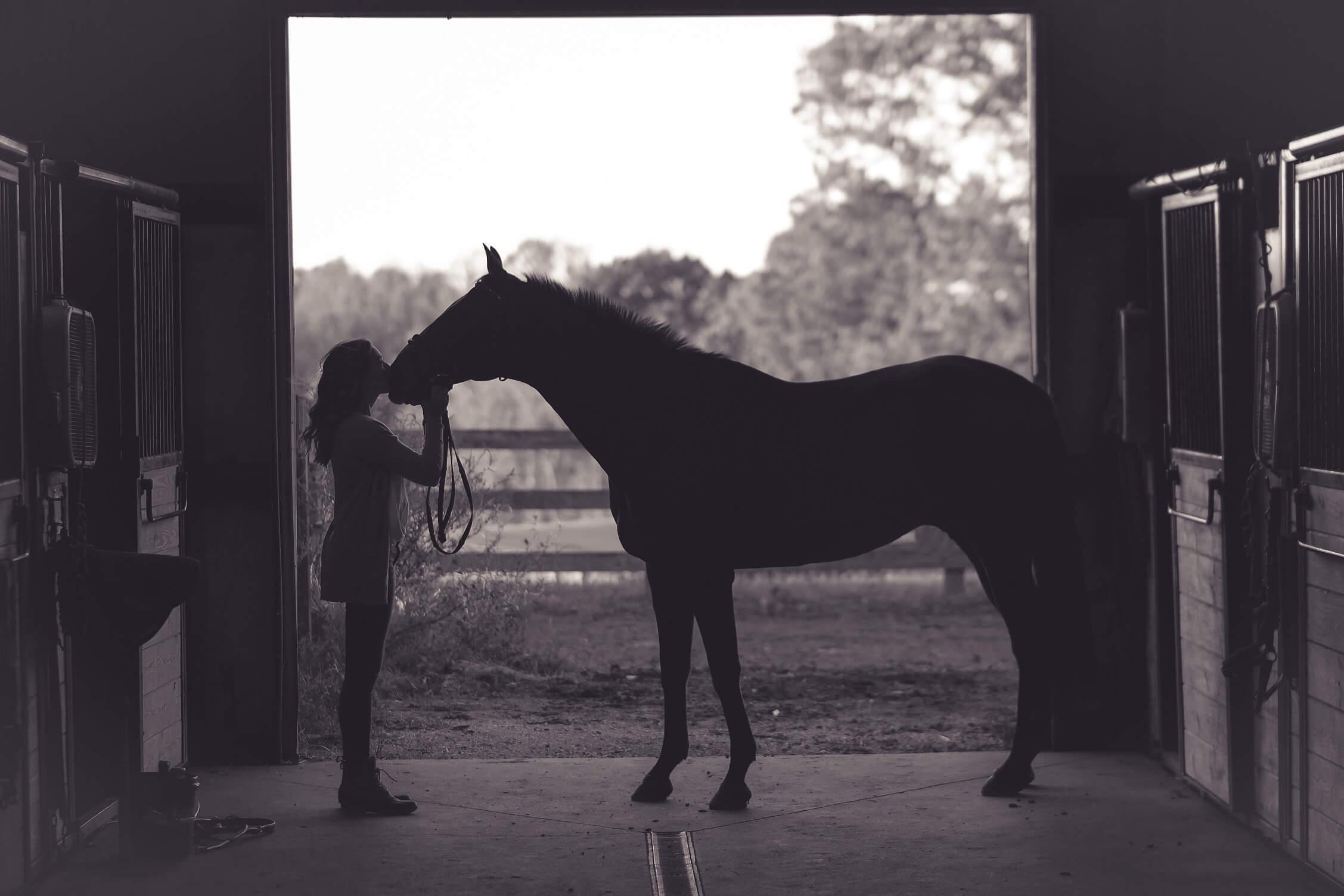 Sla je paardenbenodigdheden gemakkelijk thuis op