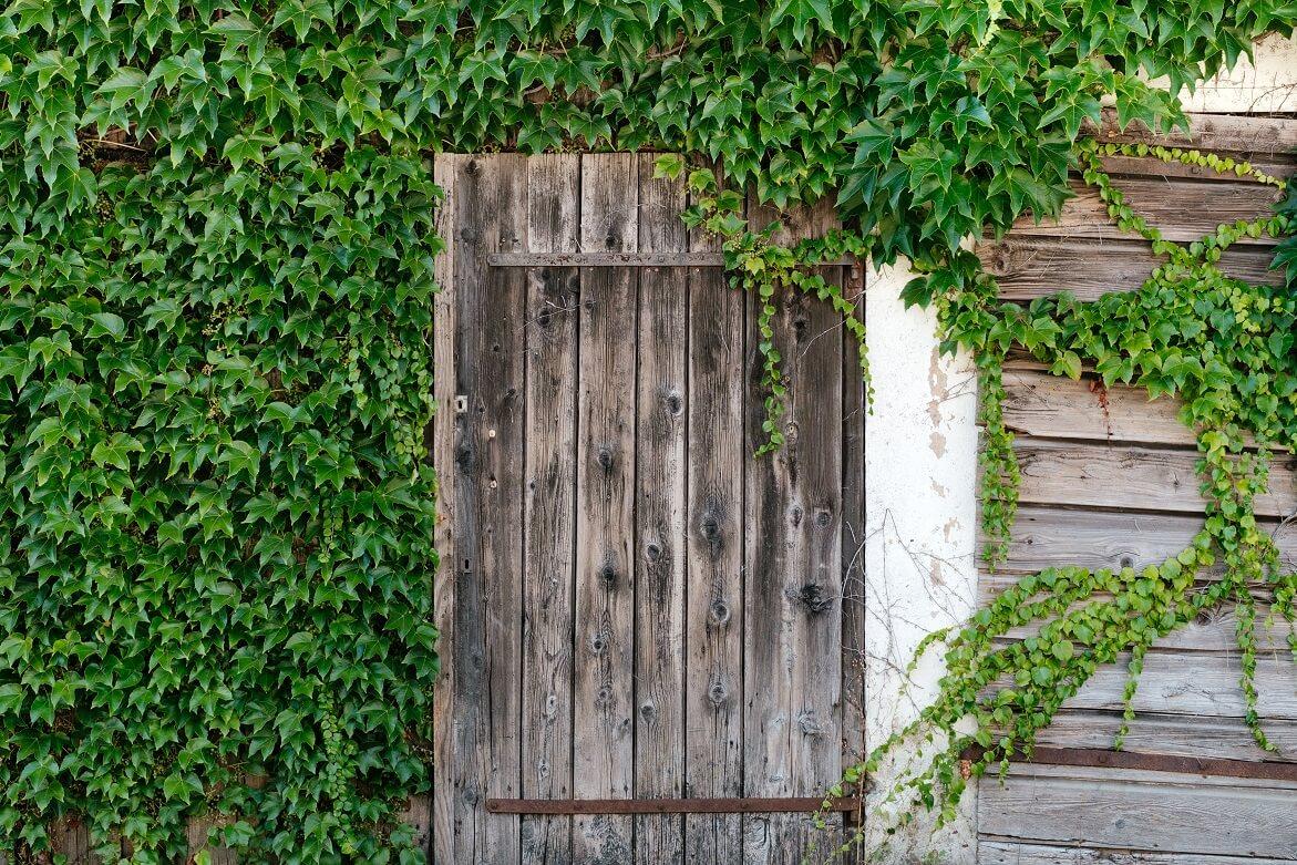 3 tips voor het uitzoeken van een schuttingdeur